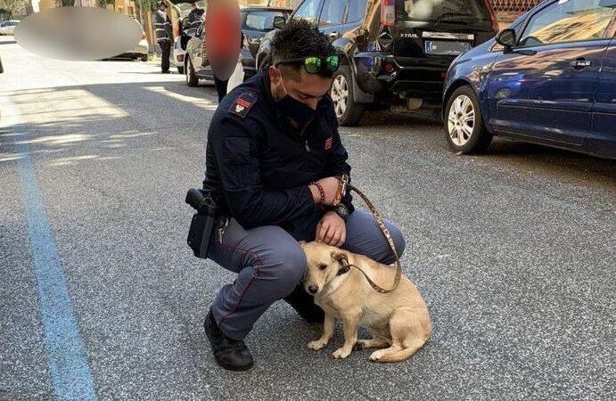 Rinvenuto dalla Polizia di Stato un cucciolo di meticcio legato ad un palo sotto il sole cocente. Adottato dall'agente che lo ha salvato.
