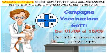 Pomezia, al via la campagna promossa da ENPA per la vaccinazione dei gatti