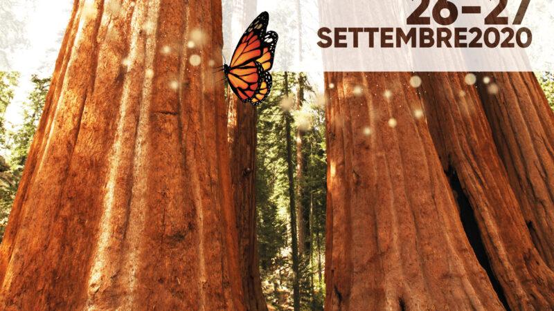 L'ASSOCIAZIONE CULTURALE ARTINMOVIMENTO presenta spettacoli, laboratori e percorsi sensoriali sotto e sopra… gli alberi