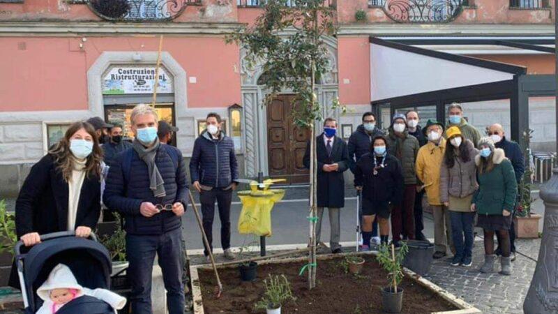 """Progetto """"Ossigeno"""" (Regione Lazio), Genzano aderisce con due lecci in Piazza Frasconi"""