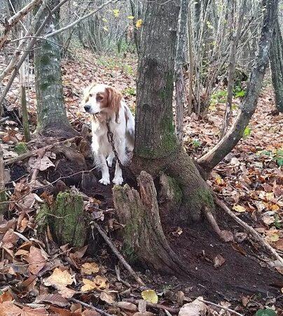 Cane legato a un albero a Rocca di Papa: lo salvano i guardiaparco