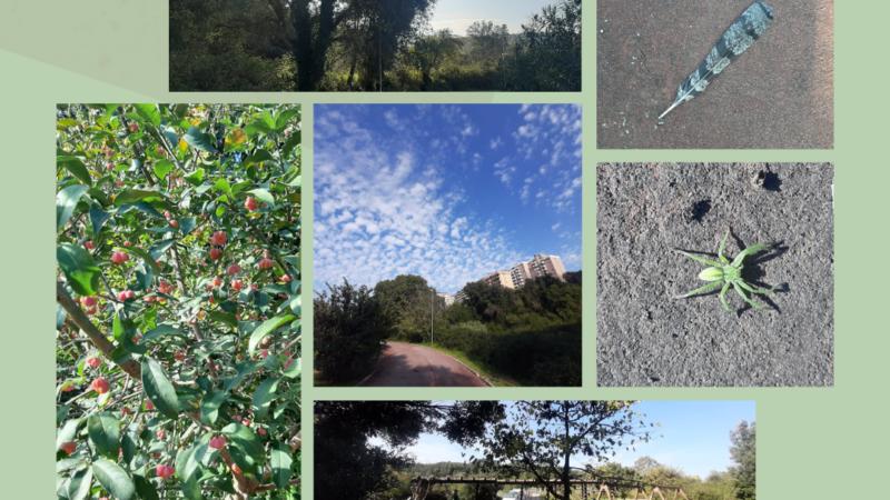 Al via #NaturaPomezia, l'iniziativa social per rilanciare le bellezze del territorio!