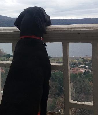 Castel Gandolfo, già tornato a casa il cucciolone Enea!
