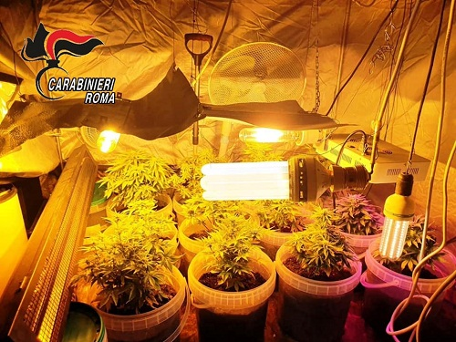 Colleferro – Scoperta serra di marijuana fai da te: arrestato coltivatore diretto e pusher
